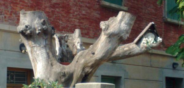 Madonnina-sull'albero.jpg