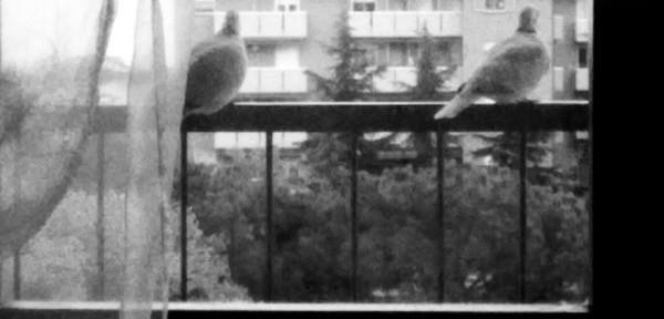 dal-balcone.jpg