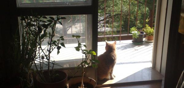 gatto-Patata-a-casa.jpg